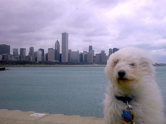 windy city.JPG