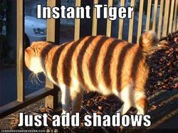 fake tigers.jpg